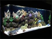 I'm looking for a good home for my 125 gallon saltwater fish tank.
