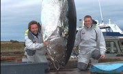 All type and Tuna fish for sale